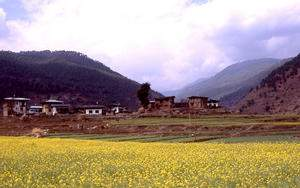 view of a field in Bhutan