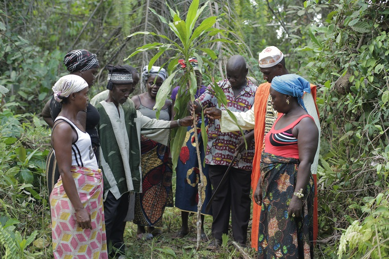 the Sihan clan in Rivercess County, Liberia, plant a tree to mark the boundary of their land