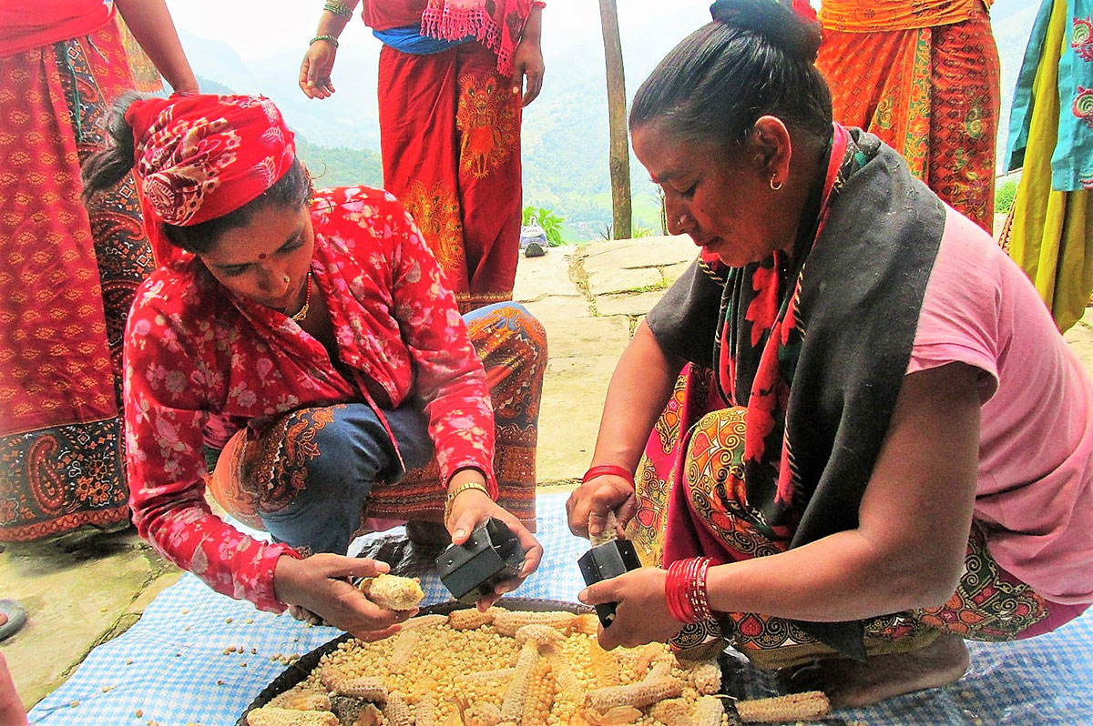 Nepalese women use a handheld sheller to remove kernels from corn cobs.