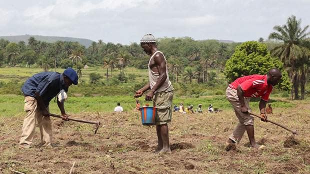 Three African farmers cultivating land